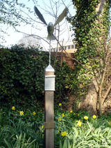Peace dove in Spring (210 kbytes) - Click to enlarge